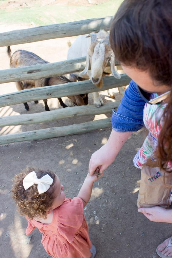 Animal Farm 4