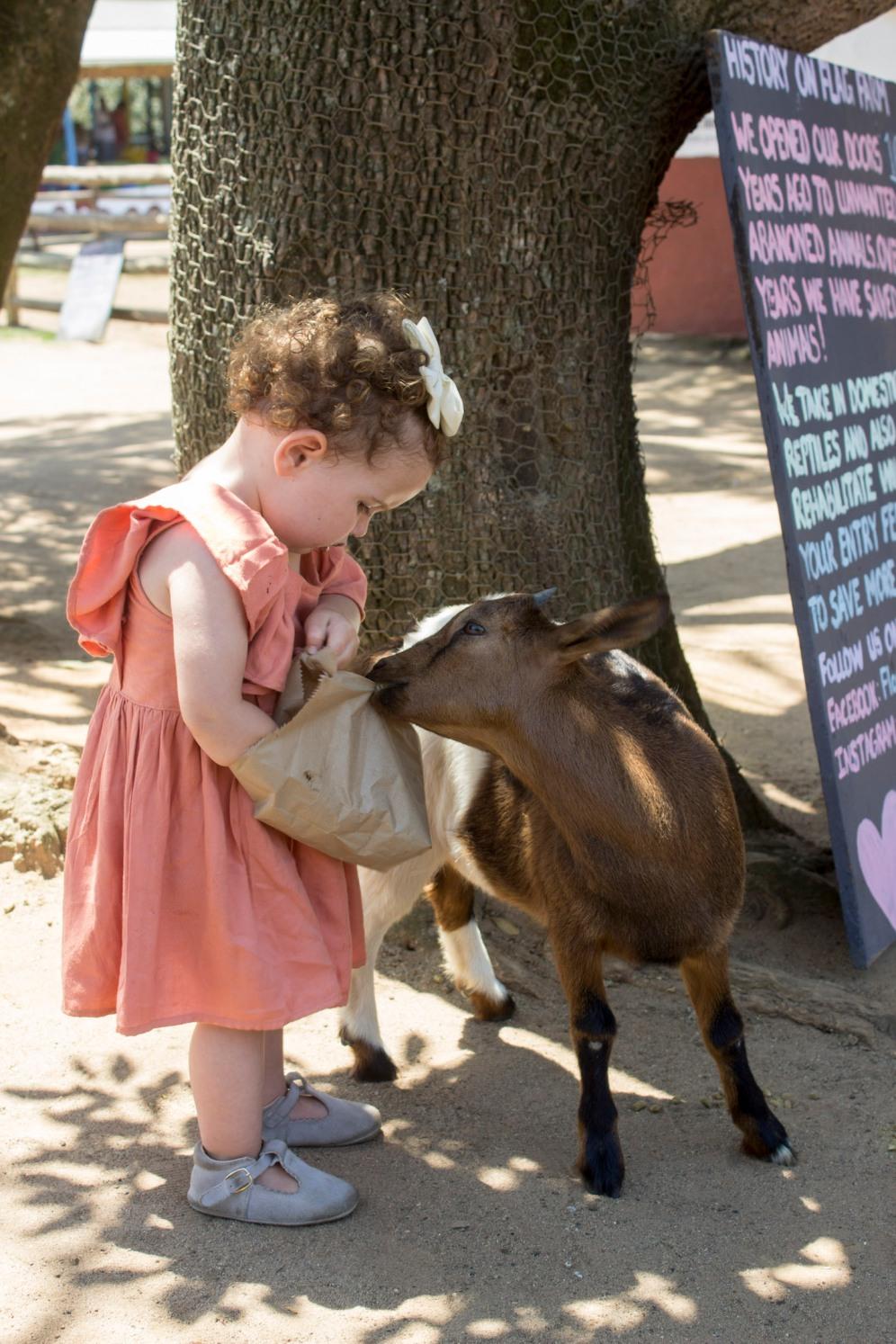 Animal Farm 5
